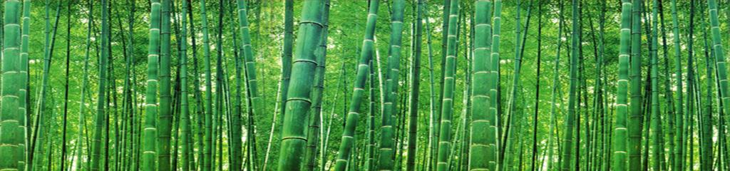 Florestas-de-Bambu-1024x240